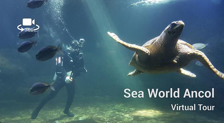 Sea world Virtual Tour
